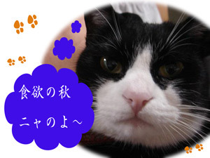 Dsc03239blog
